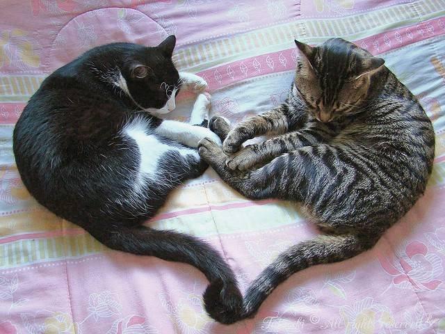 Как правильно применять Ковинан для кошек