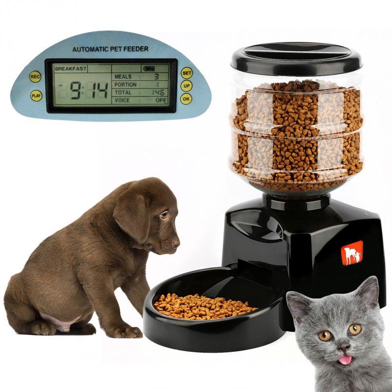 Автоматическая кормушка для кошек: особенности электронных автокормушек для котов, кормушек с таймером, с дозатором и других моделей