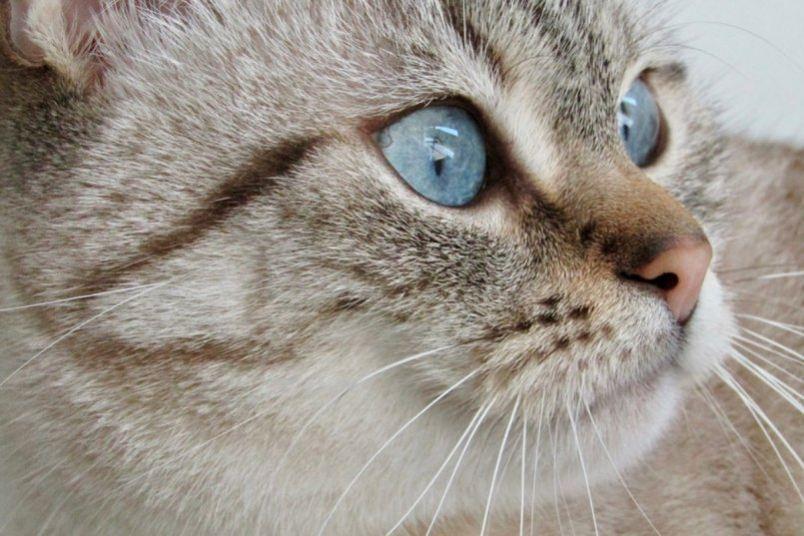 Что такое акне у котенка