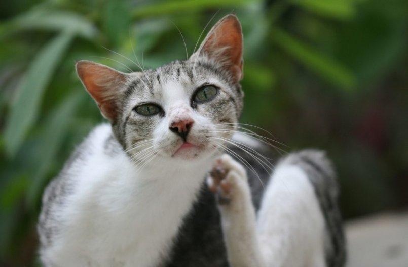 Анемия у кошек симптомы виды лечение