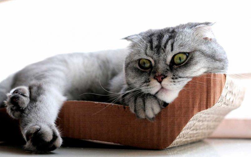 Чумка у кошек - симптомы и лечение болезни. Диагностика и профилактика кошачьей чумки.
