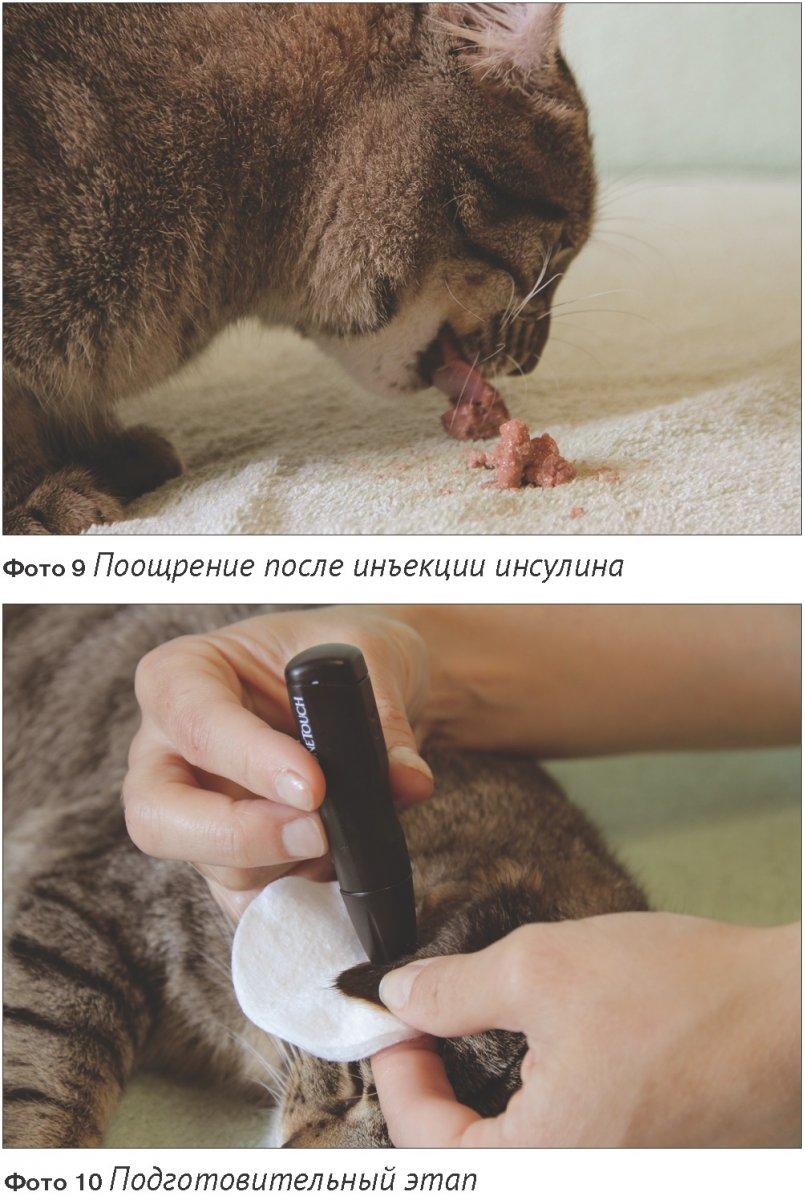 Диета диабет у собак