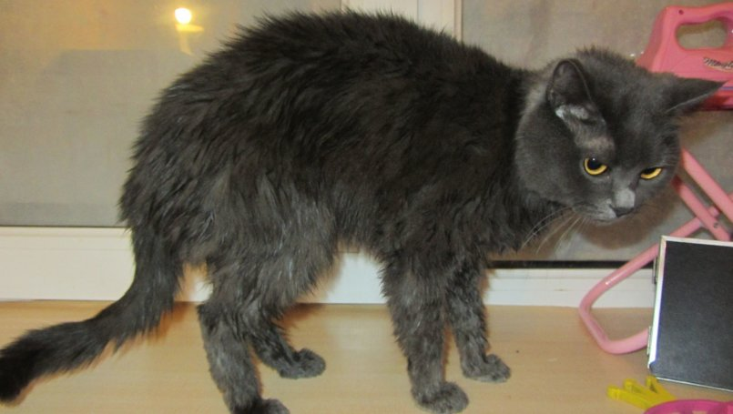 Кот Очень Похудел Не Ест. Что делать, если кошка худеет на глазах?