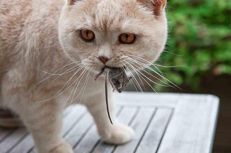 Глисты у кошек и котов - симптомы, фото и лечение глистов у котят