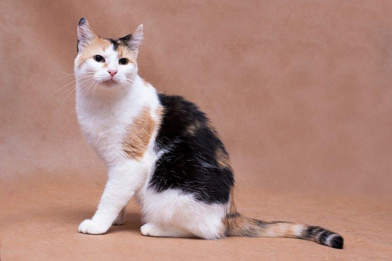 Грыжа у кота фото thumbnail