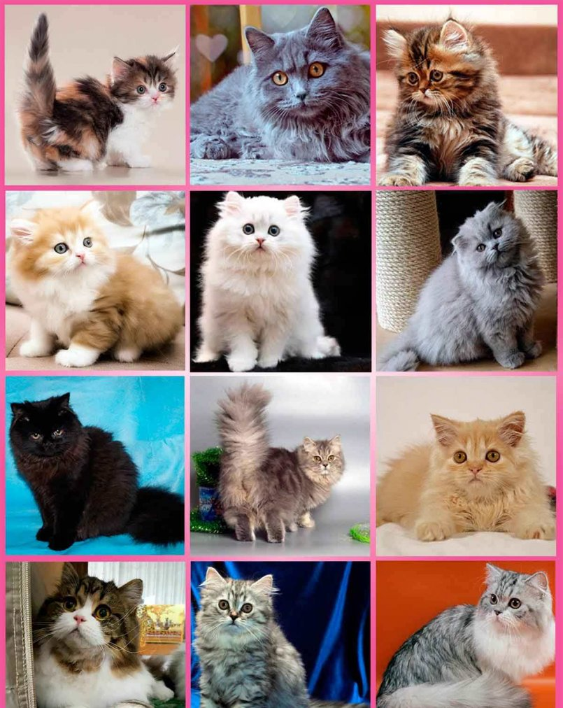 окрас кошек с фотографиями и названиями садового