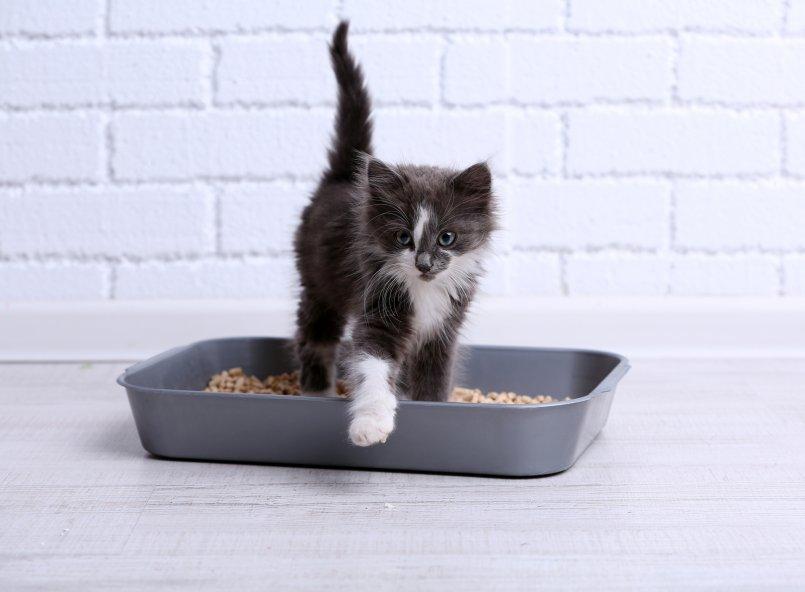 Как кошка приучает котят к лотку