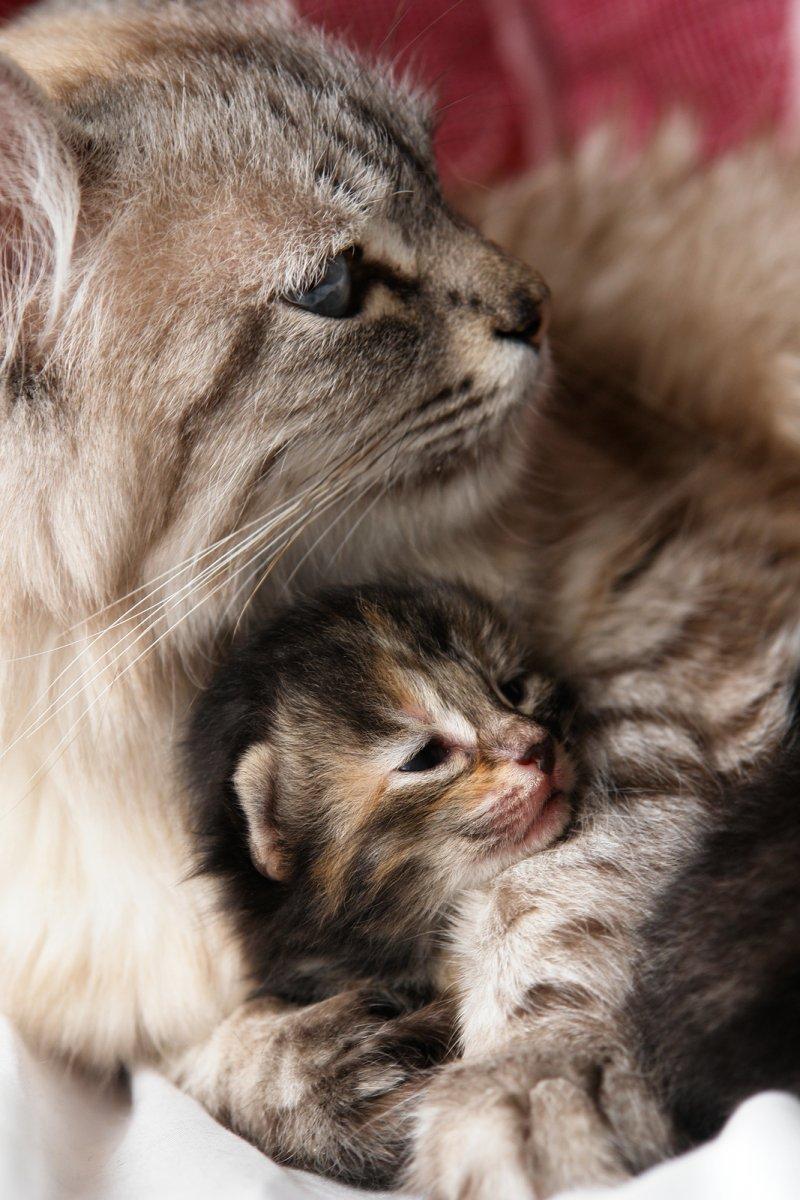 Картинка мамы кошки с котятами
