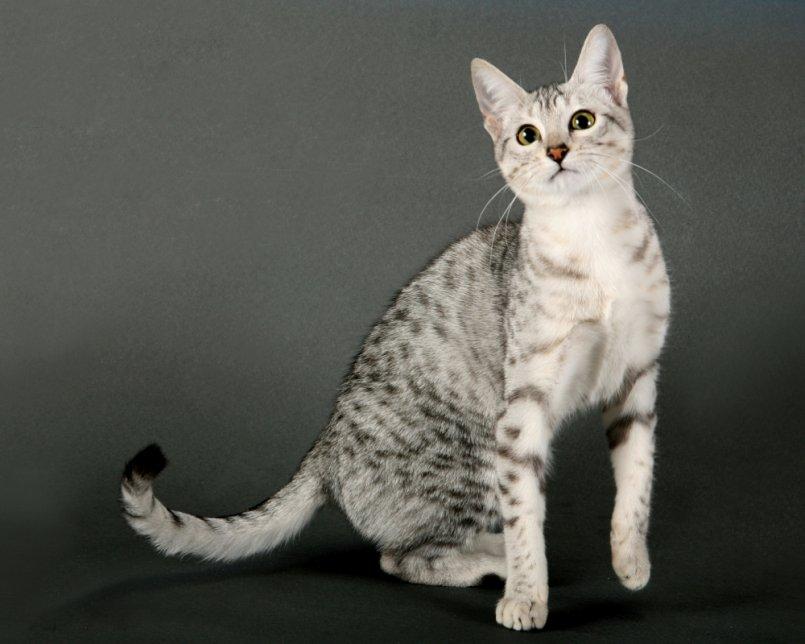 Картинки кошек и их истории