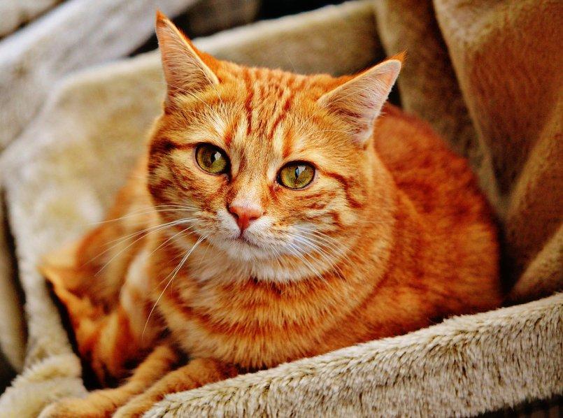 Лечение отодектоза у кошек препараты