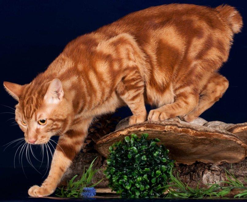 Сказки кошек с картинками производитель носителей