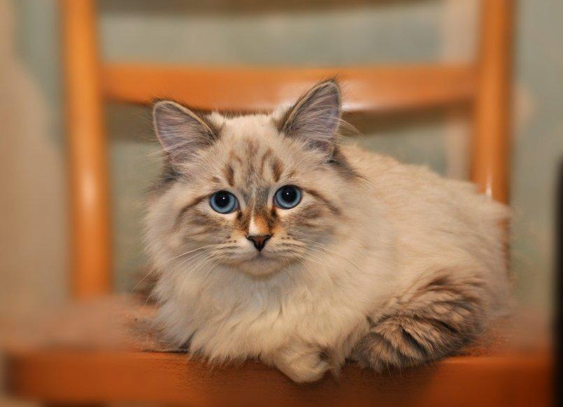 Фото кошек на дисплей агутин