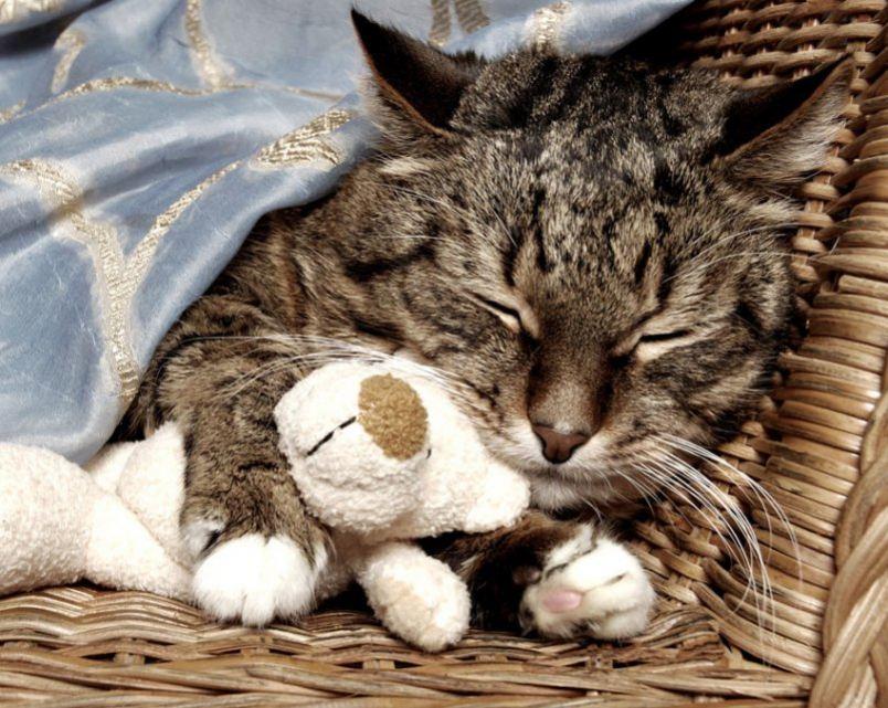 Картинки спящие кошечки