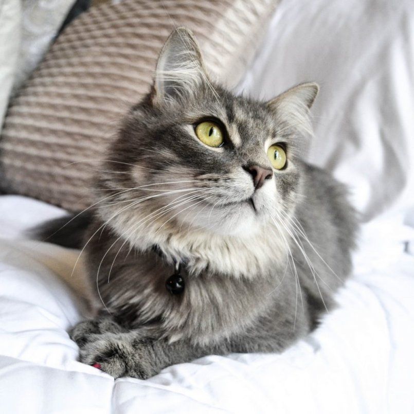 От глистов для кошек что лучше