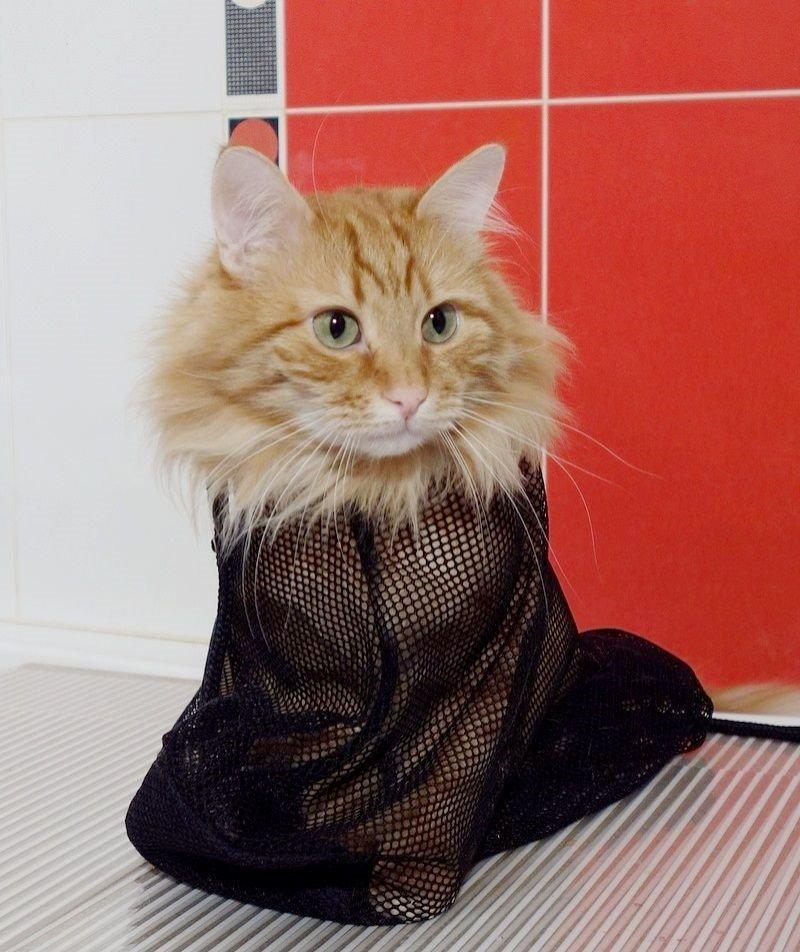 фото выпендрежной кошки что следует фронт