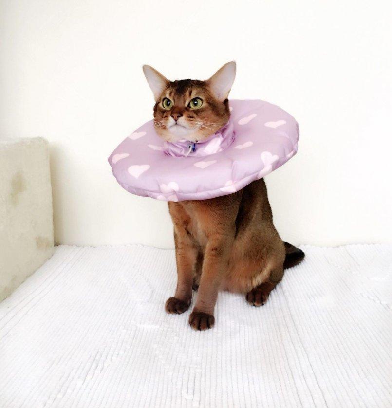 воротник для кота купить