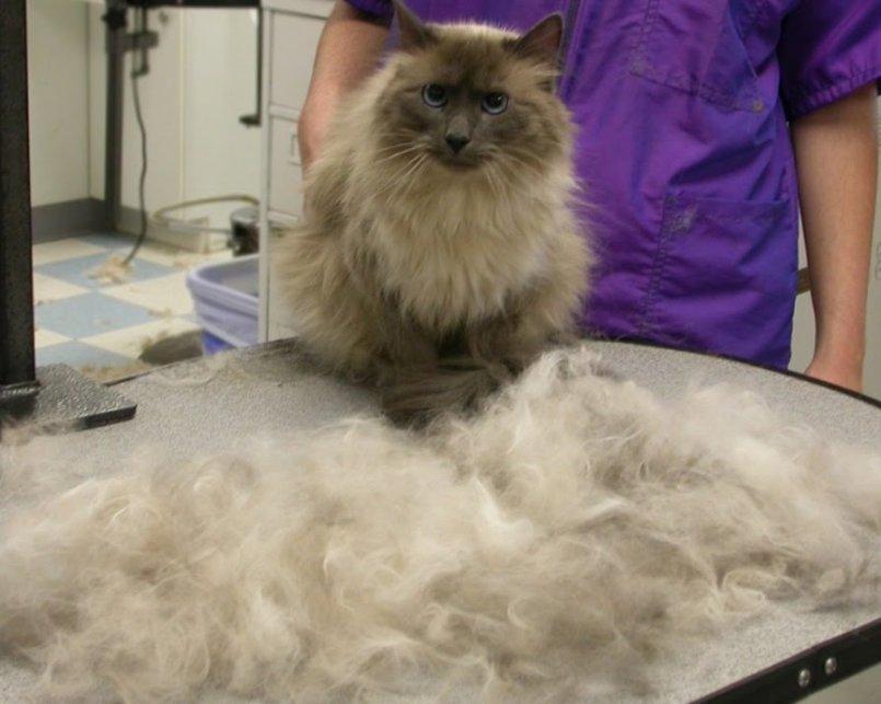 распечатать фурминатор для кошек фото до и после спины мальчика