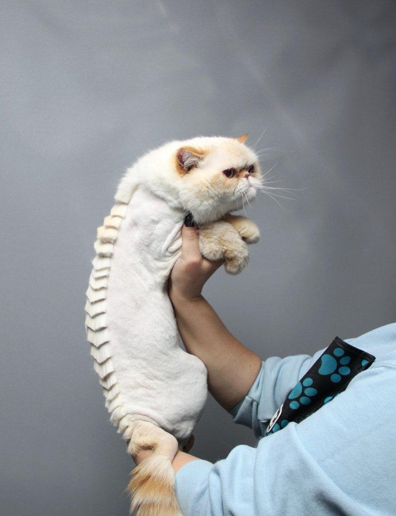 Фото хищных кошек для рабочего стола
