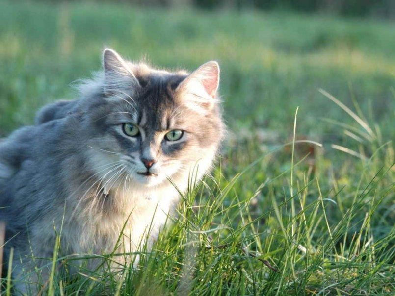 Таурин для кошек вред и польза
