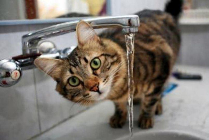 Сколько дней может кошка без воды thumbnail