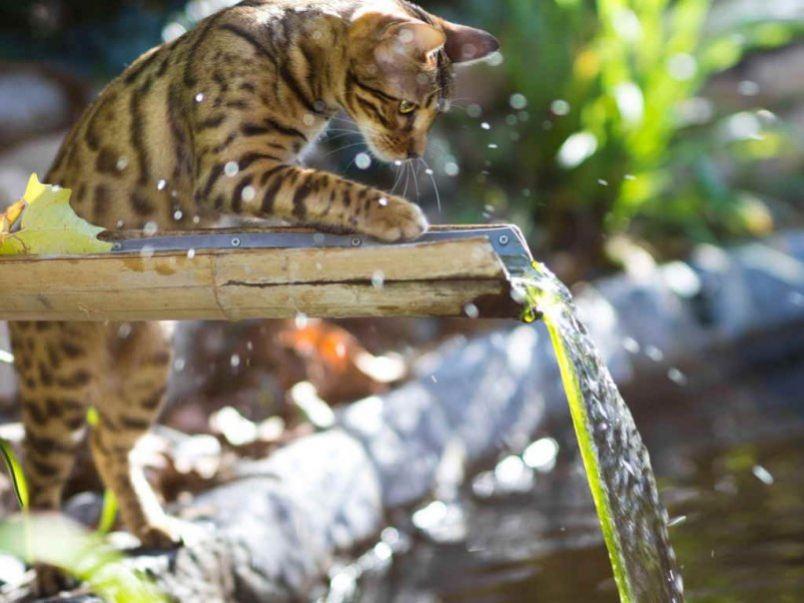 Сколько дней может кошка без воды
