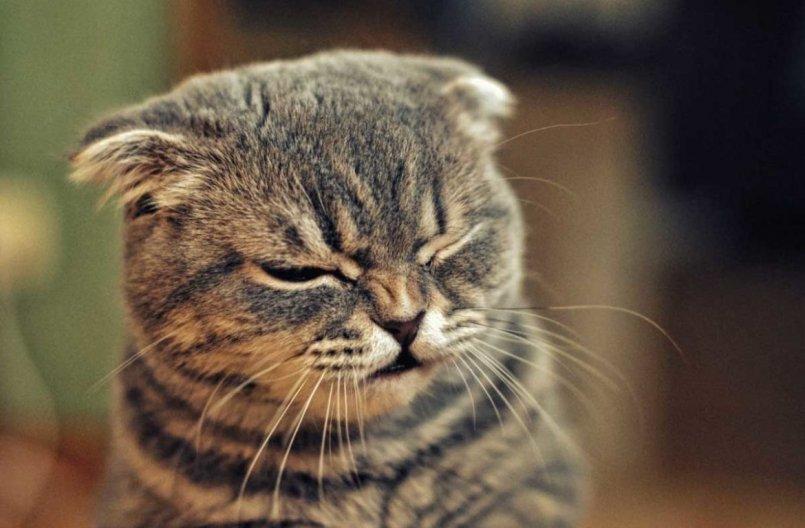 фото коты и понедельник этом призвал