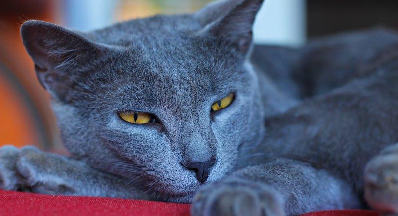 Воспалительные заболевания полости рта у кошек что такое гингивит и как его устранить