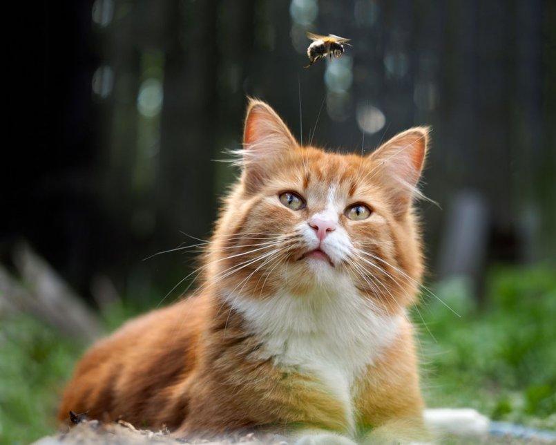 Свищ у кошек лечение в домашних условиях thumbnail