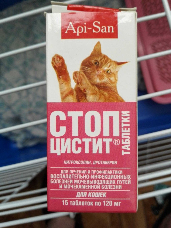 Острый цистит у кота лечение
