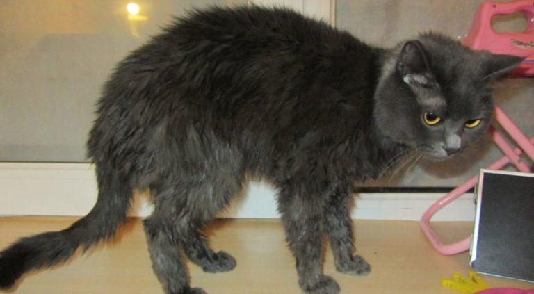 Кот очень похудел и не ест